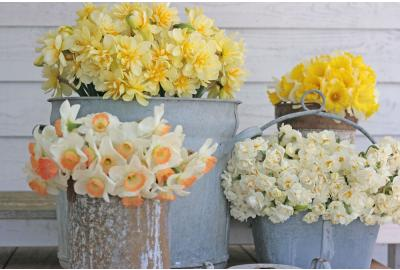 Kan ik narcissen mengen met andere bloemen in een vaas?