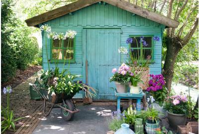Hoe plant je dahlia's in potten?