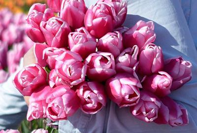 Wanneer moet ik tulpbollen en narcissenbollen planten?