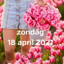 Bezoek tulpenvelden 18 april 2021