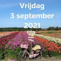 Bezoek dahliavelden 3 september 2021