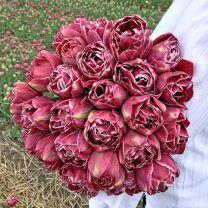 Tulip Dreamtouch