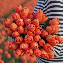 Oranje tulp Triple A