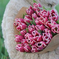 paarse tulpen - Masterclass
