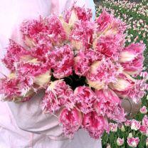 Tulip Huis ten Bosch