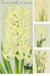 Serie 'Iris'  (4 x A5)