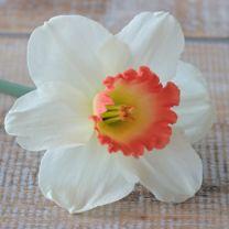 Narcis Pink Charm