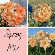 Narcissen mix