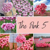 The Pink 5