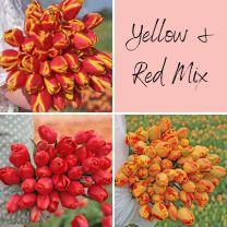 Rood-gele mix