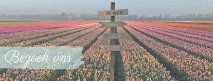 Bezoek onze bloemenvelden