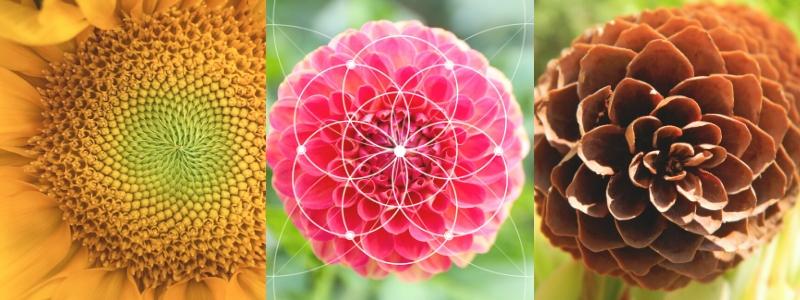 Fibonacci vorm