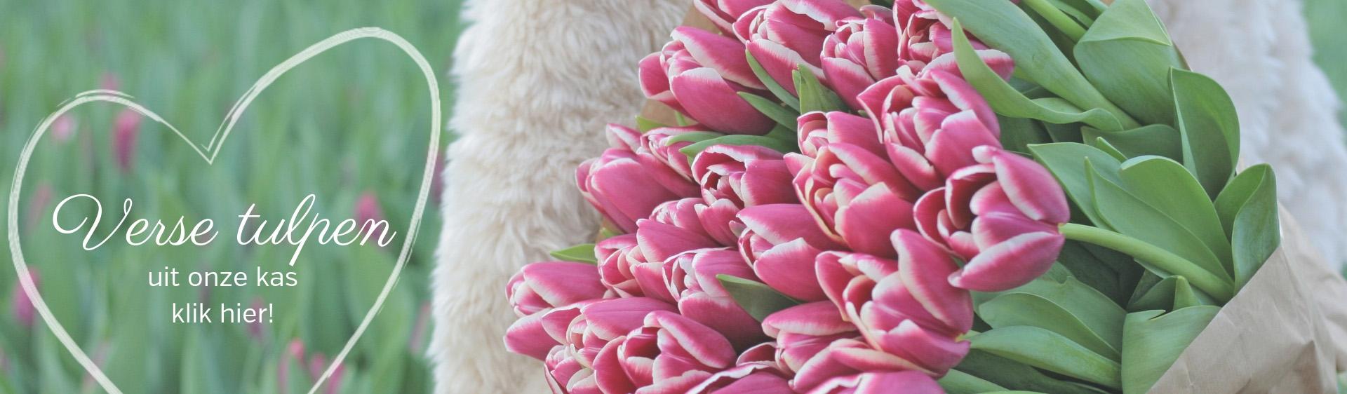 Verse tulpen uit de kas homepage banner